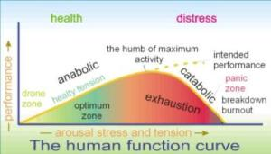 The human function curve 3.1